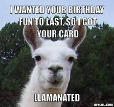 22 best llama images on pinterest fluffy pets chistes and funny