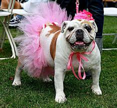 dog birthday party 12 adorably awesome dog birthday party ideas care community