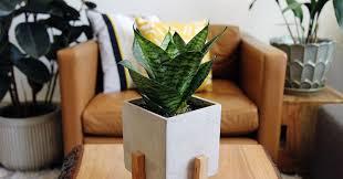 benefits of houseplants the surprising mental and physical health benefits of houseplants