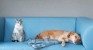 home décor ideas for pet lovers mozaico blog