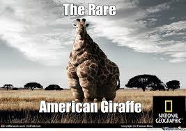 Meme Giraffe - giraffe by xshadowxwolfx meme center
