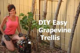 how to build an arbor trellis how to build a diy easy grapevine trellis youtube