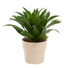 Air Purifying Plants 9 Air by Sghaze Hack 8 House Plants That Can Purify The Air At Home The