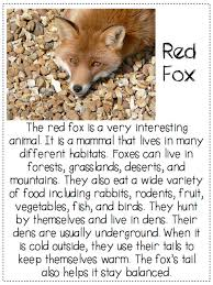 a day in first grade what does the fox say finding the main