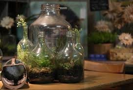 sealed bottle garden worlds in bottles self sustaining terrariums offer hassle free self