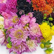 flower wholesale wholesale flowers bulk wedding flowers online bloomsbythebox