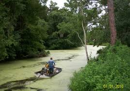 programs natural resources weeds and pasco county fl official website aquatic weed control program