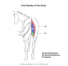 choosing a stretch for your horse stretch your horse
