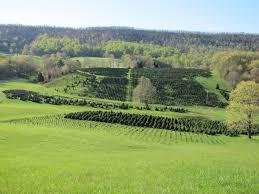 spruce ridge tree farm virginia is for lovers