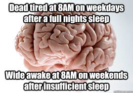 Scumbag Brain Meme - dead tired at 8am on weekdays after a full nights sleep wide awake
