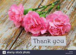 thank you card with pink carnations on rustic wooden surface stock