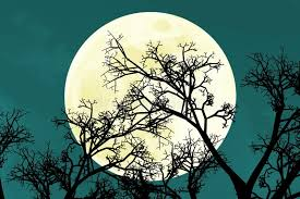 beautiful bright moon rise tree branches stock image