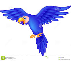 margaritaville clipart parrot clipart blue parrot pencil and in color parrot clipart