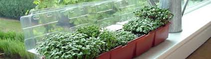 Windowsill Greenhouse Window Sill Gardening From Suttons Seeds
