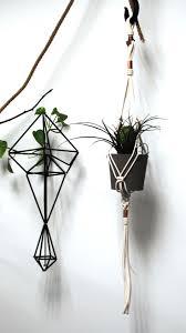 Inside Plants by 39 Best Indoor Plants Images On Pinterest Indoor Plants Potted