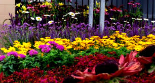 Landscape Flower Bed Ideas by Architectures Traditional Landscape Design With Flower Bed Front
