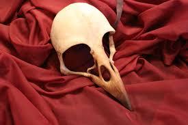 crow mask halloween crow raven bird skull mask album on imgur