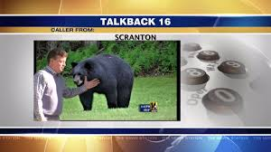 Home And Backyard Wnep Talkback 16 Backyard Bears Comey Testimony And Reheating A Cold