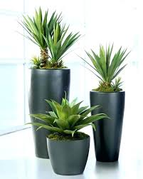 best indoor plants for low light low light houseplants low light indoor plants modern pots for indoor