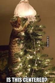Cat Christmas Tree Meme - funny cat christmas tree bajiroo com