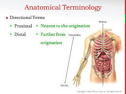 Human Anatomy Terminology Copyright John Wiley U0026 Sons Inc All Rights Reserved Chapter 1