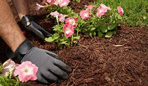 How To Mulch Flower Beds How To Kill Weeds Naturally Mulch Scotts