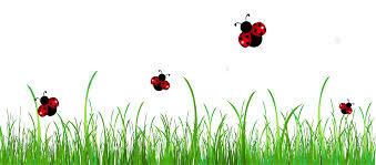 halloween borders transparent background ladybug birthday clipart clip art library
