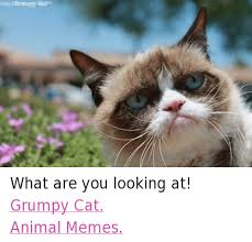 25 Best Memes About Grumpy - 25 best memes about grumpy cat animated grumpy cat animated memes