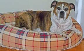 boxer dog quebec boxerrescuequebec com