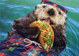 otter eats tacos pop up stand out funny birthday card by avanti press