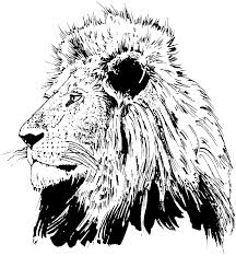 tiger two tigers ready for hunting coloring page coloring pages