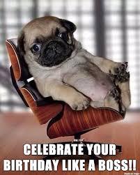 Birthday Pug Meme - pug birthday meme on imgur