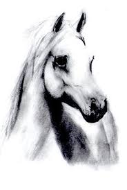 white mustang horse drawn horse black and white pencil and in color drawn horse