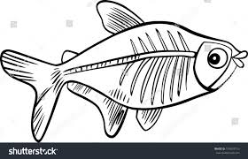 cartoon illustration xray fish coloring book stock vector