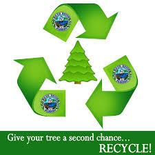 tree recycling boca raton fl
