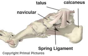 Talus Ligaments Tendonitis Achilles Posterior Tibial And Peroneal