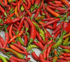 thai burapa pepper seeds