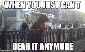 Funny Bear Memes - city bear meme imgflip