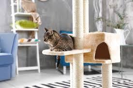 best cat tree reviews top 5 cat trees in nov 2017