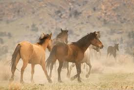 Black Mustang Horse Pictures The Beauty Of Running Free Now Beautifulnow