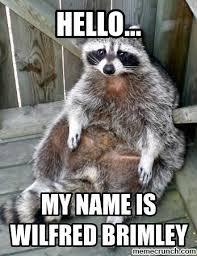 Meme Generator Raccoon - raccoon meme generator meme best of the funny meme