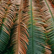 michael chichi photography botanical dimensions