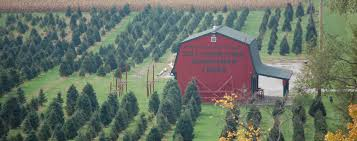 carl u0026 dorothy young u0027s christmas tree farm