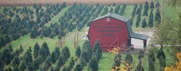 carl u0026 dorothy young u0027s christmas tree farm