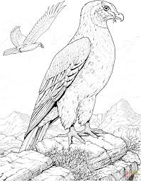 hawk prey bird coloring page free printable coloring pages