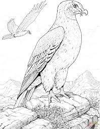 coloring pages bird hawk prey bird coloring page free printable coloring pages