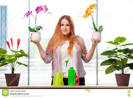 the redhead woman taking care of plants at home stock photo