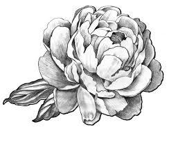 tattoo flower drawings black and grey peony flower tattoo design