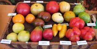 cuisiner les l馮umes anciens une fête berrichonne pour de légumes et fruits anciens