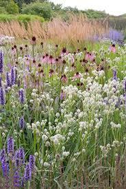 agastache black adder eryngium yuccifolium echinacea pallida